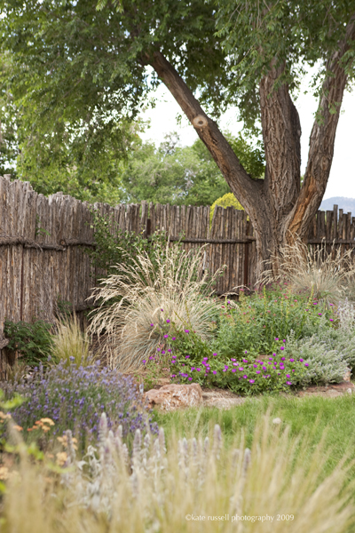 Ornamental grass with perennials