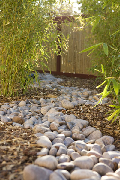 Streambed meandering through bamboo