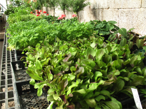 Starts Currently Available at Agua Fria Nursery.