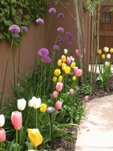 Spring bulbs-sm